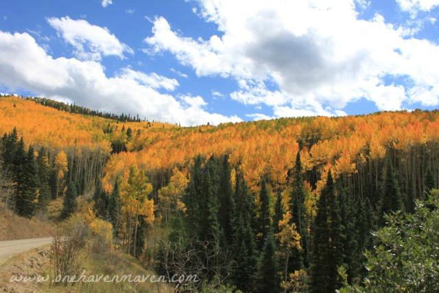 fall-in-ridgway